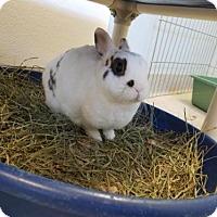 Adopt A Pet :: KEVIN - Dedham, MA