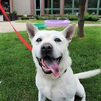 Adopt A Pet :: Cliff - Indianapolis, IN