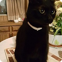 Adopt A Pet :: Rick - Alhambra, CA