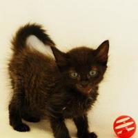 Adopt A Pet :: Farah - Toccoa, GA