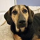 Adopt A Pet :: Mireille