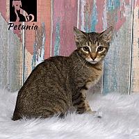 Adopt A Pet :: Petunia - Tomball, TX