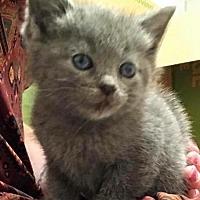 Adopt A Pet :: Miss Squeaks - Leonardtown, MD
