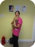 Domestic Mediumhair Cat for adoption in Philadelphia, Pennsylvania - Stonewall