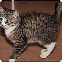 Adopt A Pet :: Geranimo - New York, NY