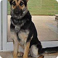 Adopt A Pet :: Meisha - Pike Road, AL