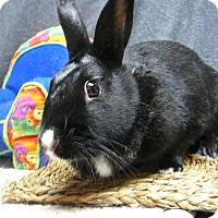 Adopt A Pet :: Edie - Newport, DE