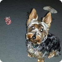 Adopt A Pet :: Buddy - San Dimas, CA
