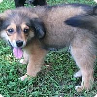 Adopt A Pet :: Kato - Smyrna, GA