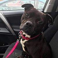 Adopt A Pet :: Becky - Voorhees, NJ