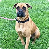 Adopt A Pet :: Craven - New Oxford, PA