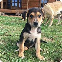 Adopt A Pet :: Hemingway - Morganville, NJ