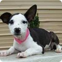Adopt A Pet :: Yara - Madisonville, TN