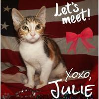 Adopt A Pet :: JULIE - Converse, TX