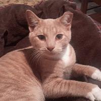 Adopt A Pet :: Fergis - Carlisle, PA