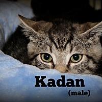 Adopt A Pet :: Kaden - Springfield, PA
