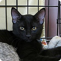 Adopt A Pet :: Cody - Frederick, MD