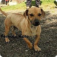 Adopt A Pet :: Kate - Maysel, WV