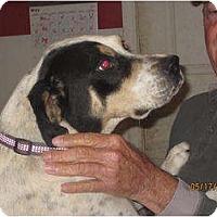 Adopt A Pet :: Love Bug - Afton, TN