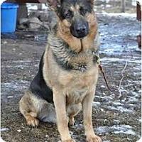 Adopt A Pet :: Onyx - Hamilton, MT