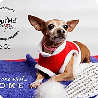 Adopt A Pet :: Ce Ce - Shawnee Mission, KS