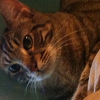 Adopt A Pet :: Verne - Baton Rouge, LA