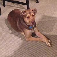 Adopt A Pet :: MICKEY 4 - Chandler, AZ