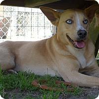 Adopt A Pet :: Ivy - Manning, SC