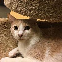 Adopt A Pet :: Tatiana - Dahlgren, VA