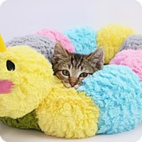 Adopt A Pet :: Tiny - Yucaipa, CA