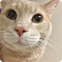 Adopt A Pet :: Hernando - Salisbury, MA