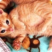 Adopt A Pet :: Saber - Kalamazoo, MI