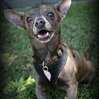 Adopt A Pet :: Benny - Lodi, CA
