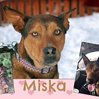 Adopt A Pet :: Miska - Jerome, ID
