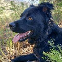 Adopt A Pet :: Oynx - Albuquerque, NM
