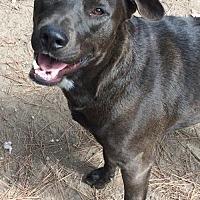 Adopt A Pet :: Polman - Hartford, CT