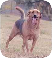 Shepherd (Unknown Type)/Hound (Unknown Type) Mix Dog for adoption in Tahlequah, Oklahoma - Jackie