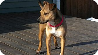Shepherd (Unknown Type) Mix Dog for adoption in Hastings, New York - Teddy