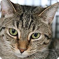 Adopt A Pet :: Josie - Frederick, MD