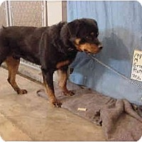 Adopt A Pet :: Brownie/Adopted! - Zanesville, OH