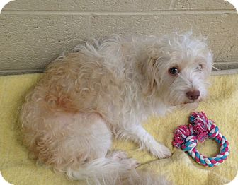 Terrier (Unknown Type, Medium)/Terrier (Unknown Type, Small) Mix Dog for adoption in Greensburg, Pennsylvania - Harry