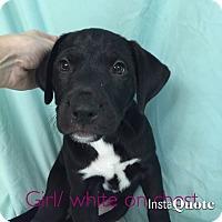 Adopt A Pet :: Emily Dickinson - Cumming, GA