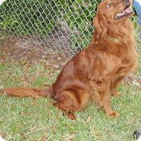 Adopt A Pet :: Sherry - Murdock, FL