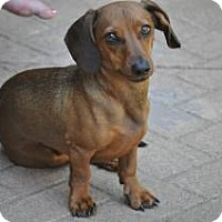Adopt A Pet :: RUSTY - Forest Ranch, CA
