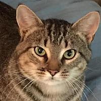 Adopt A Pet :: Coop - Asheboro, NC