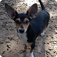 Adopt A Pet :: Sport(PC) - Von Ormy, TX