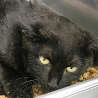Adopt A Pet :: Kentucky - Hilton Head, SC