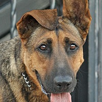 Adopt A Pet :: Violet von Visel - Los Angeles, CA