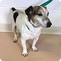 Adopt A Pet :: Herman Applebee - Allentown, PA