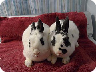 Dwarf Mix for adoption in Hillside, New Jersey - Sally & Suzy